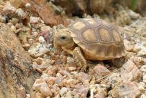 desert_tortoise_090603_36.jpg