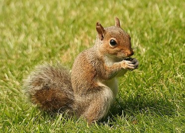 squirrel-5.jpg